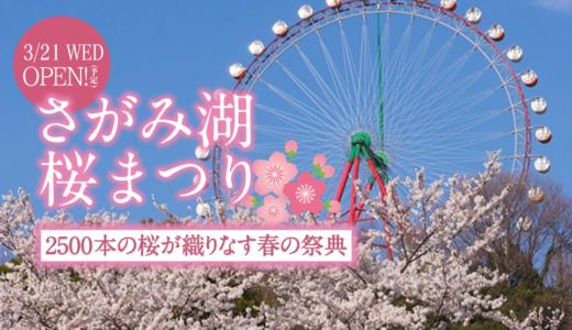 関東最大級‼️2500本の桜の祭典🌸「さがみ湖リゾートプレジャーフォレスト」で開催