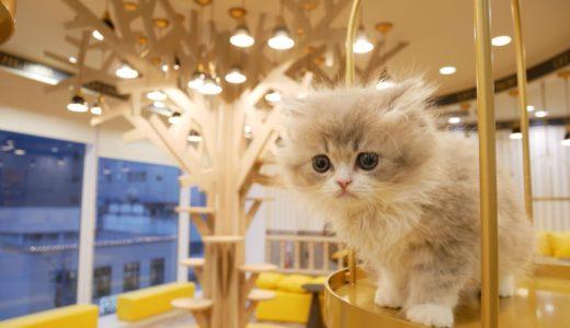 猫カフェMOCHA🐈京都河原町に11店舗目となる新店舗をオープン、4月19日(木)